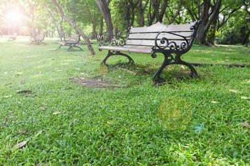 bench in summer park