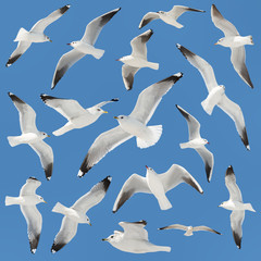 white bird collection on sky background