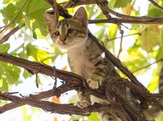 kitten on the nature
