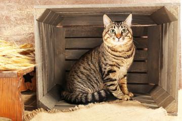 Grey cat in wooden box