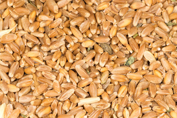 wheat as background. close-up