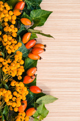 briar and yellow berry background