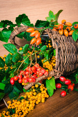 colorful autumn fruits and plants