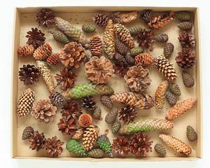 Set of autumn cones in a box