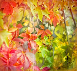 Soft focus on colorful foliage-autumn leaves in forest