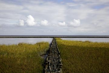Salzwiese an der Nordsee im Watt