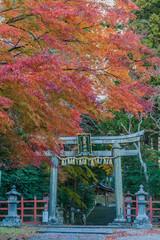 秋の塩竈神社の鳥居