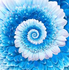 Gerber flower infinity spiral abstract background