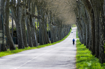 Road with plane trees