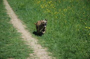 Hund in der Natur