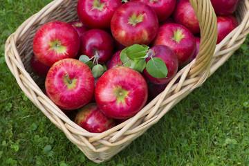 Apple Basket full of Honeycrisp apples