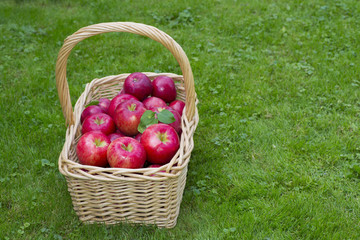 Apple Basket full of Honeycrisp apples
