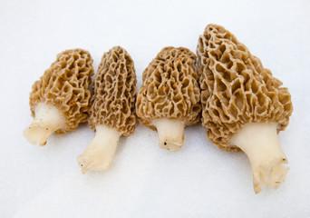 Morchella Morels Sponge Mushrooms