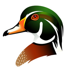 vector illustration of wood duck