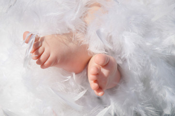 Baby feet in feathers