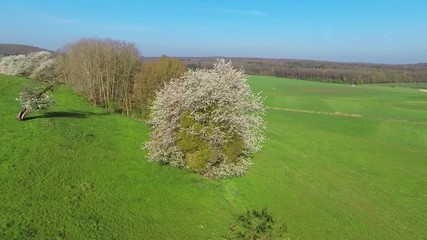 aerial view of blooming tree in spring