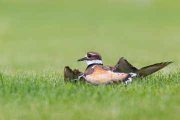 Killdeer Act