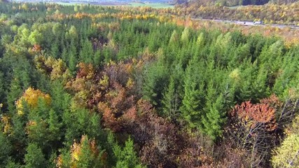 flying over autumn forest, highway visible in the background