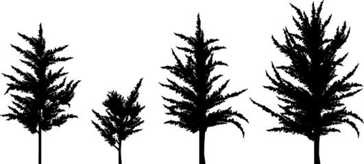 four tree silhouettes set isolated on white