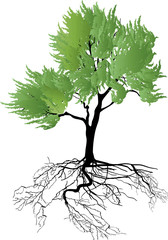 light green isolated tree with root