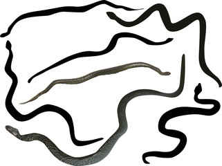 seven snakes isolated on white