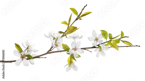 Fotobehang Lente spring tree branch with light flowers