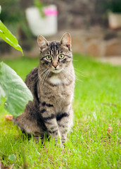 gray domestic cat walking on green grass