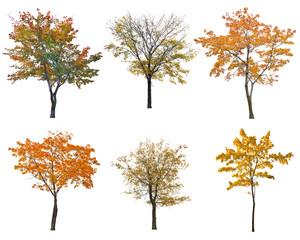 set of six autumn trees isoalted on white