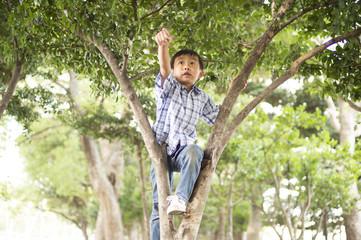 Boy climb a tree