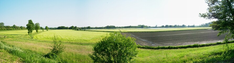 Coltivazione riso