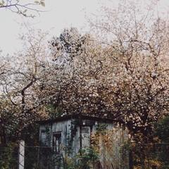 contryside blossom