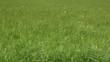 Fields, Plains, Meadows, Pastures, Landscapes