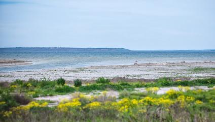 Estuary and grasses in coastal area