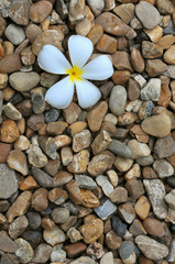 white plumeria flower on floor stone