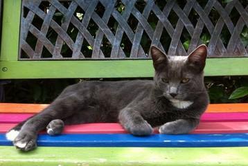 gato cinzento no banco de jardim