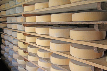 series of forms of aged cheese in the dairy of a hut