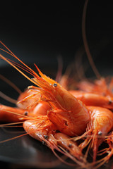 Crevettes-6502