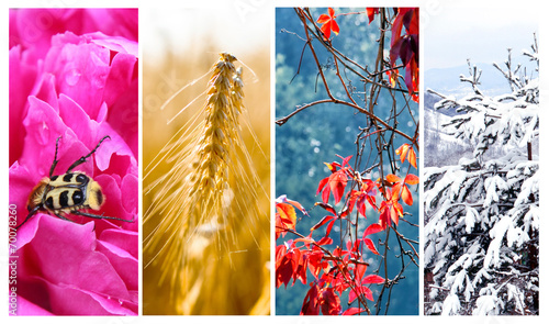 Four seasons: Spring, summer, autumn and winter - 70078260