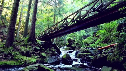 forest river flowing under a bridge in the black forest, germany
