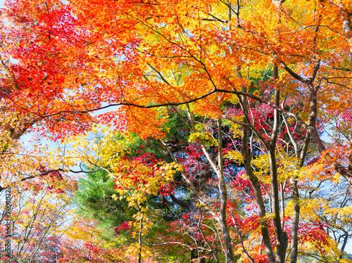 Fotobehang Tuin Farbexplosion im Herbstwald mit Sonnenlicht