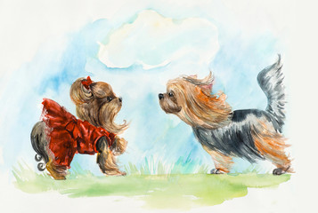 Two dog. Yorkshire terrier. Dog`s meeting. Dog`s dresses.