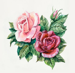 Two pink roses. Pattern from rose. Wedding drawings.
