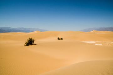 sand dune landscape Death Valley National Park