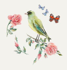 Greenfinch. Pattern from roses.