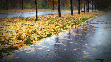 Wet weather autumnal alley with yellow red foliage and cold Rain