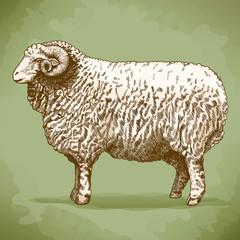 vector illustration of engraving ram