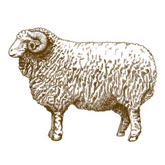vector illustration of engraving ram
