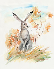 Hare. Autumn composition.