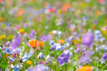 Meadow with colorful flowers growing in the grass.