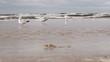 Gulls on beach